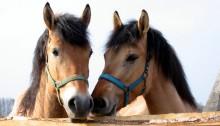Czym kierować się przy wyborze konia?