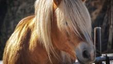 Koński włos