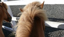 Widok z grzbietu konia
